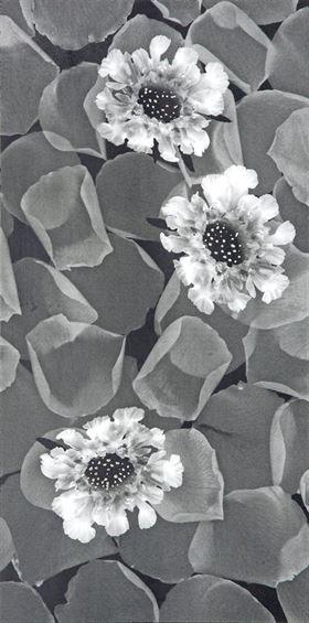 (DELFİNA) Granite-Ceramic Decor BC-306012